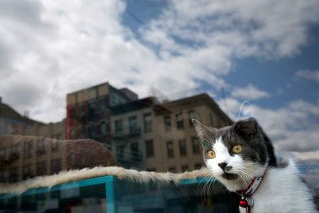 FILE PHOTO: A cat looks out a window at a cat cafe in New York