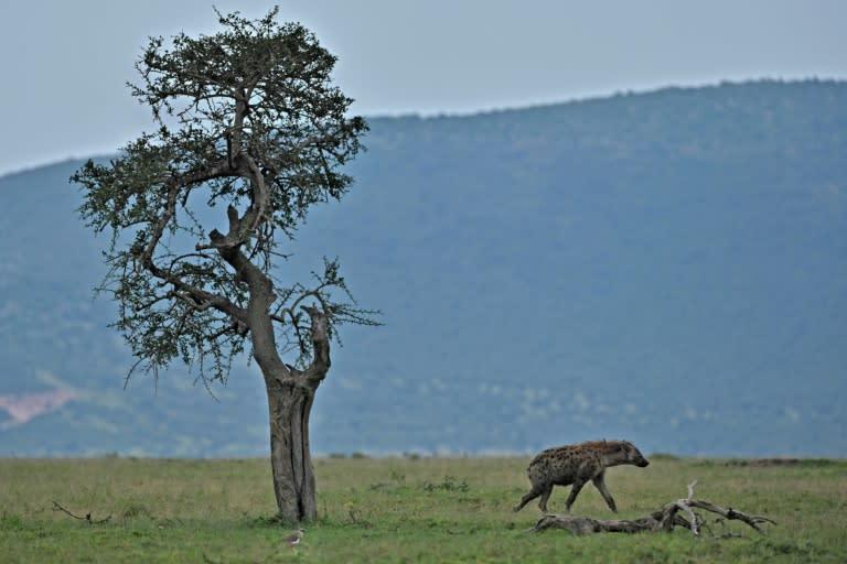 Maasai Mara's entire reserve model is under threat (AFP Photo/Tony Karumba)