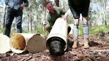 Chris Hemsworth helps return Tasmanian devils
