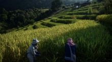 Thai rice farmers shun 'big agribusiness' and fight climate change