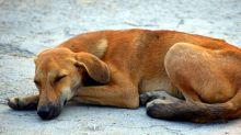 Conselho de Veterinária alerta sobre abandono de animais durante a pandemia