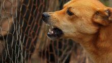 USA: Uccisa da una muta di cani, madre lascia quattro figli