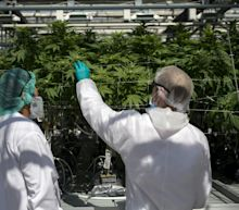 As Cannabis D-Day Approaches, Winners and Losers Set to Emerge