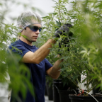 A $10 billion marijuana producer just spun off its venture arm in the hopes it will become the 'Google Ventures of cannabis' (RIV)