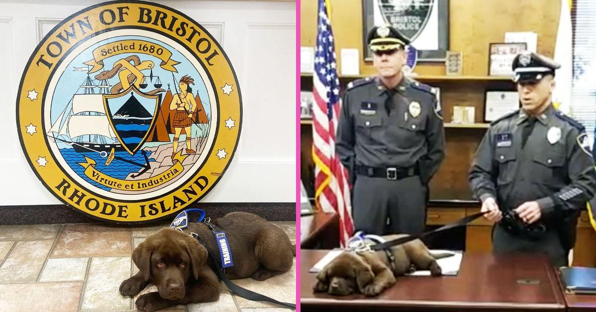 Police Pup Sleeps Through His Entire Swearing-In Ceremony