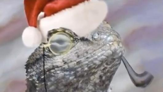 Lizard Squad hacker arrested for cyber-fraud
