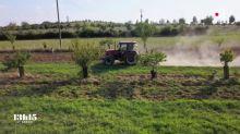 Avec l'agroforesterie, les arbres et les haies reviennent dans les champs pour restaurer un écosystème vertueux