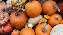 This state grows the most pie pumpkins in America