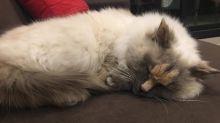 Katze mit besonderem Markenzeichen wird berühmt – ihr Spitzname gefällt ihr sicher nicht