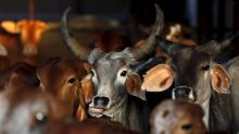 India is embracing the internet of cows to help its dairy farmers