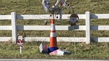 'Cone Weed' gets Christmas makeover in North Carolina town