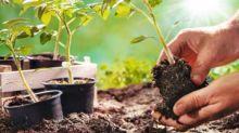 7 astuces insolites pour cultiver son jardin pendant le confinement