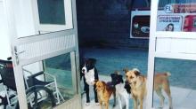 """Wahre Liebe: Hunde harren vor Krankenhaus auf """"ihren"""" Obdachlosen"""