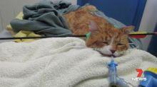 Cat found with arrow in neck after sickening animal cruelty attack