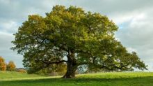 How to plant trees – and help save the planet