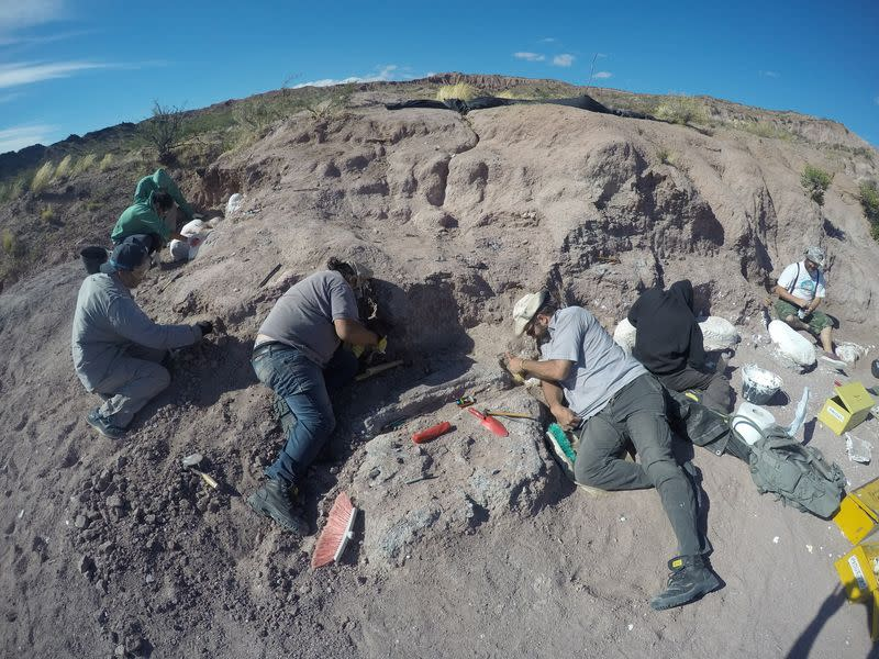 Fossils of oldest member of huge dinosaur group found in Argentina - Yahoo News
