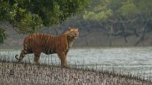 Where to spot the tiger in India