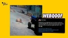 Tractor Driver Runs Over Cow, Video Viral With False Communal Spin