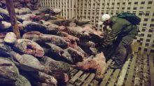 Recent data show Chinese fishing fleet still near Galapagos