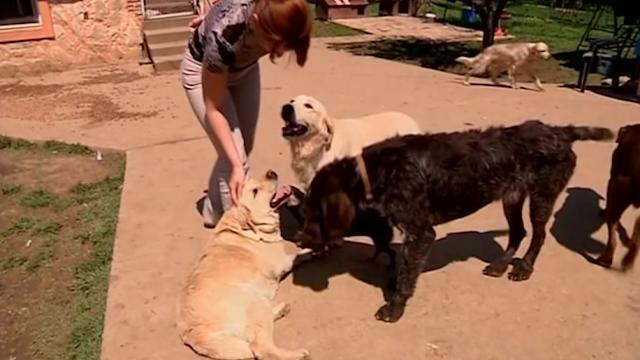 Dog shelter works to reunite animals with owners after floods