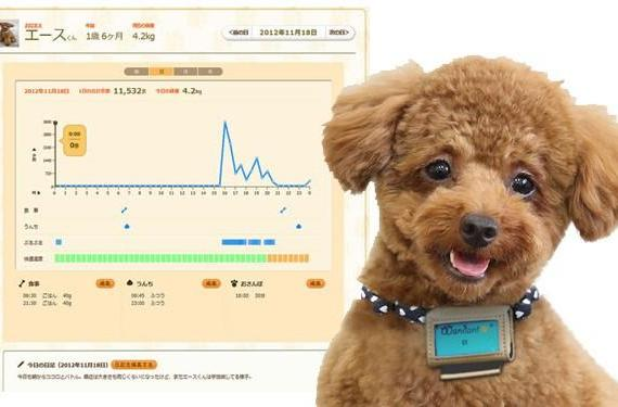 Fujitsu's Wandant dog pedometer tracks your pet's moves, uploads them to the cloud