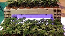 Cannabis, uno studio su 100mila adolescenti dimostra che la liberalizzazione non aumenta il consumo