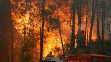 Incêndios florestais provocaram perda de cobertura vegetal recorde em 2016, diz grupo