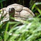 Tortoise Escapes Japan Zoo but Doesn't Get Far
