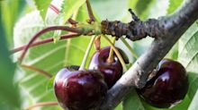 Grow to eat: some edible crops grow in shade - but be realistic