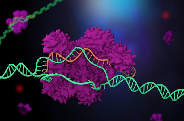 CRISPR gene editing has been used on humans in the US