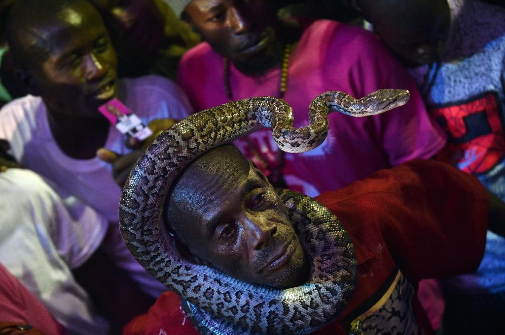A Haitian supporter puts a snake on his head during an electoral rally for presidential candidate Jovenel Moise in Port-au-Prince, on January 8, 2016 (AFP Photo/Hector Retamal)