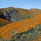 "Wildflower ""super bloom"" attracting fans on a quest for the perfect picture"