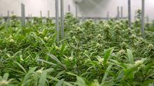 It's Official: Canada's Recreational Marijuana Bill Has Been Delayed