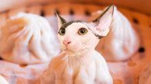 Gatos photoshopeados en comida se vuelven virales