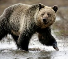 Wyoming approves controversial hunt of Yellowstone area grizzlies