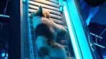 Veterinária desmente uso de anestésico em cachorro de novela da Globo: 'Nunca entramos no set com qualquer tipo de droga'