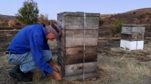 Australian bushfires scathe sanctuary for rare bee species
