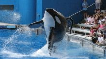 SeaWorld: Former trainer says deaths of three killer whales a 'disgrace to humanity'