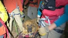 Floyd The 190-Pound Dog Rescued From Hike After Getting Too Tired