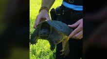 Haute-Garonne : la gendarmerie alerte sur la présence de tortues carnivores en bordure du canal du Midi