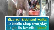 Bizarre! Elephant walks to beetle shop everyday to get its favorite 'paan'