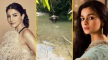 Act Most Inhumane: Anushka, Alia on Kerala Elephant's Killing