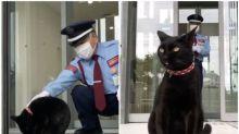 【有片】日本美術館黑貓近況 瞓門邊嘆冷氣任摸