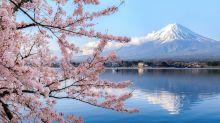 2020日本櫻花情報預測!全國10個絕美賞櫻景點推介