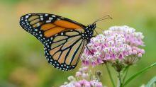 Fleißige Bienchen: So viel erwirtschaften Insekten