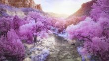 The best infrared photography from around the world
