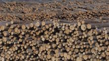 Forestry companies fall as U.S. housing stats show potential slowing demand