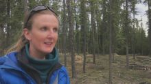 FireSmart tree cutting in Whitehorse irks local homeowner
