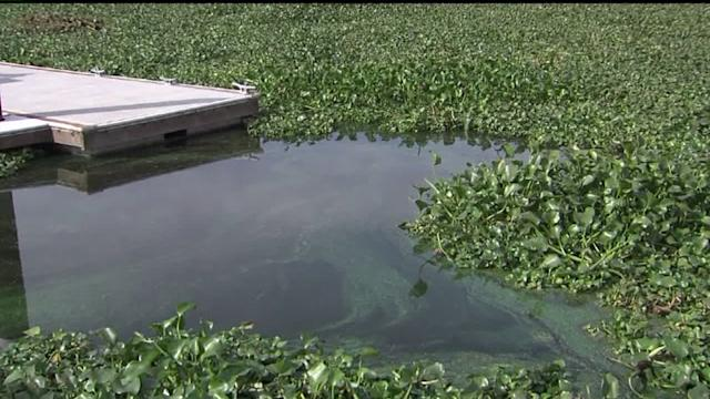 City Finding Creative New Ways To Combat Invasive Species
