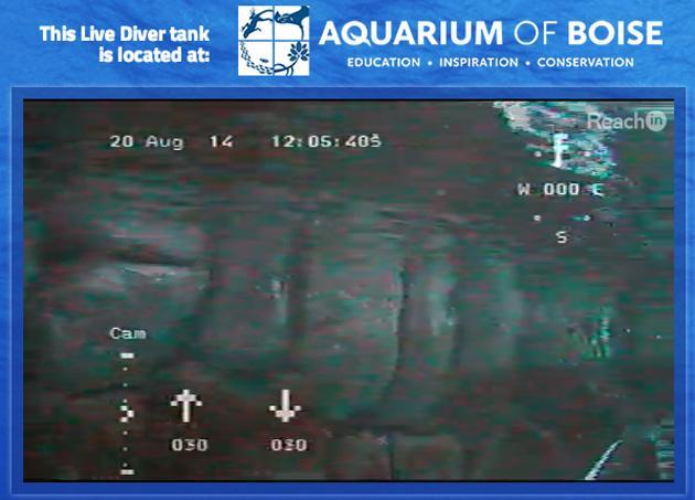 Aquarium of Boise gives the internet control of a tank-dwelling submarine